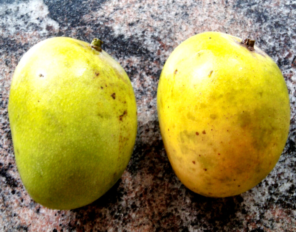 two-mangoes